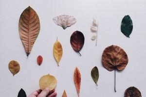 Георгины полезные свойства и противопоказания thumbnail